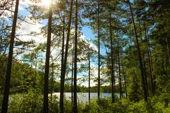 Normal view on a Finnish summer cottage Royalty Free Stock Photo