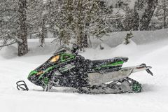 Snowmobile in the pine forest. A normal winter day turns into a snowstorm in the middle of the pine forest, the mountains are covered in powder snow and a royalty free stock images