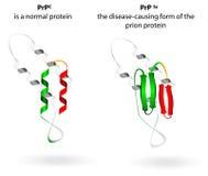 Normale proteïne en prion ziekten. Vector regeling Royalty-vrije Stock Afbeeldingen