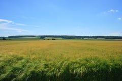 Normand de Vexin Foto de Stock Royalty Free