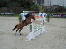 Normandie hästshow Royaltyfri Fotografi
