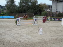 Normandie hästshow Arkivfoton