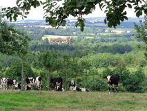Normandie, vaches et pommiers Royalty Free Stock Photos
