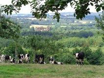 Normandie, vaches und pommiers Lizenzfreie Stockfotos