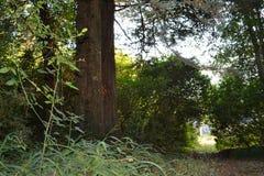 Normandie-Wald Stockfotografie