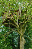 Normandie, wood hut in a tree in the park of Canon castle Royalty Free Stock Photos