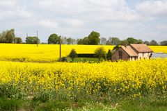 Normandy / France: An old traditional farmhouse in the middle of blooming rapeseed fields in the French countryside during spring Stock Photography
