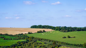 Normandy landscape. A classic Normandy landscape from France Royalty Free Stock Photography