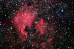 norr Amerika nebula Royaltyfri Fotografi