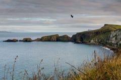 Norr Antrim seglar utmed kusten, nordligt - ireland Arkivfoton