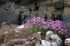 Norr flora Fotografering för Bildbyråer