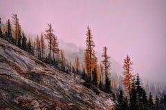 Norr kaskadnationalpark i tidig vinter arkivfoton