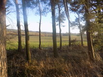 Norr Northumberland, skogsmark, England, UK Arkivfoton