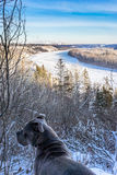 Norr Saskatchewan River Valley i vinter, Edmonton Royaltyfria Bilder