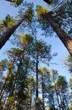 Norr skog Arkivbild