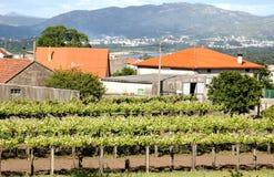 norr västra spain vingård Royaltyfri Fotografi