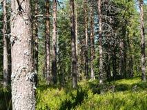 Norra Mora Vildmark Natural Reserve Imagens de Stock Royalty Free