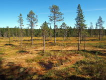 Norra Mora Vildmark Natural Reserve foto de stock royalty free