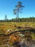 Norra Mora Vildmark Natural Reserve. Norra Mora Vildmark is one of Sweden's largest nature reserves. This wilderness is dominated by vast stretches of  mire  and Stock Photos