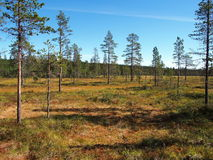 Norra Mora Vildmark Natural Reserve. Norra Mora Vildmark is one of Sweden's largest nature reserves. This wilderness is dominated by vast stretches of  mire  and Royalty Free Stock Images
