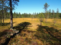 Norra Mora Vildmark Natural Reserve Royalty Free Stock Photo