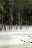 norris水坝的田纳西有雾的河 库存照片