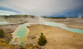 Norris Geyser Basin Stock Photography