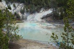 Norris Geyser Basin geyserpöl, Yellowstone nationalpark Arkivfoto