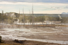 The Norris Geyser Basin of Yellowstone Stock Photo