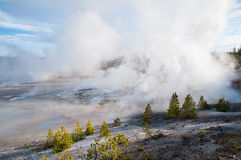 Norris Geyser Basin Royalty Free Stock Photo