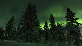 Norrsken bak träd i nordliga Finland royaltyfri fotografi