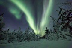 Norrsken (nordliga ljus) i Finland, Lapland skog Arkivfoto
