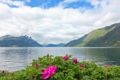 Norsk fjord med en ro Fotografering för Bildbyråer