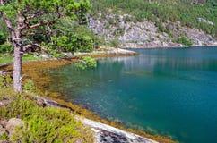 Norsk lös natur i sommarsäsong Arkivbilder