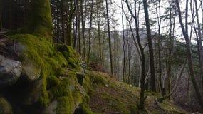 Norsk skog Fotografering för Bildbyråer