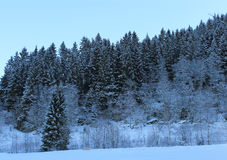 Norsk skog 005 Royaltyfri Bild