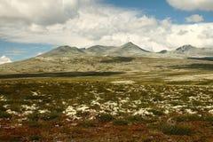 norska kullar Arkivfoton