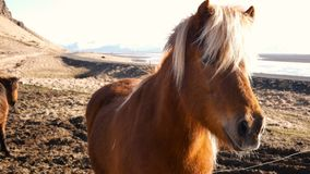Norte da vila dos cavalos video estoque
