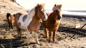 Norte da vila dos cavalos filme
