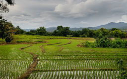 Norte de Tailandia al Campos de arroz стоковое изображение