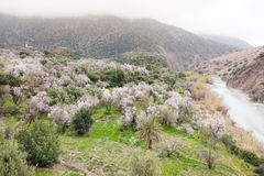 North african mountain valley in springtime. Royalty Free Stock Photo