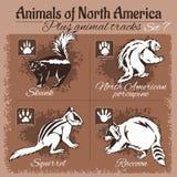 North America animals and animal tracks, footprints. Vector set Royalty Free Stock Photography