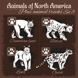 North America animals and animal tracks, footprints. Stock Photos