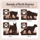 North America animals and animal tracks, footprints. Royalty Free Stock Photos