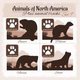 North America animals and animal tracks, footprints. Royalty Free Stock Photo