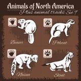 North America animals and animal tracks, footprints. Royalty Free Stock Image