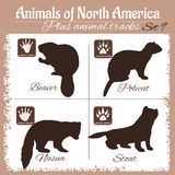 North America animals and animal tracks, footprints. Stock Images