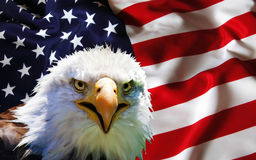 North American Bald Eagle on American flag.  Stock Photo