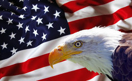 North American Bald Eagle on American flag.  Royalty Free Stock Photography
