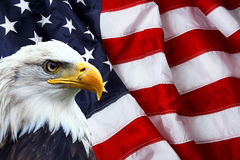 North American Bald Eagle on American flag. In background stock images